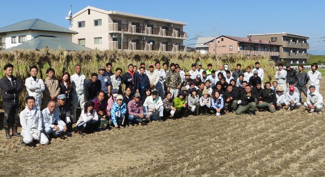 餅米の稲刈り